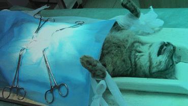 Kedi ve Köpek Kısırlaştırma Operasyonları