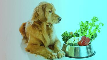 Beslenme ve Diyet Takibi